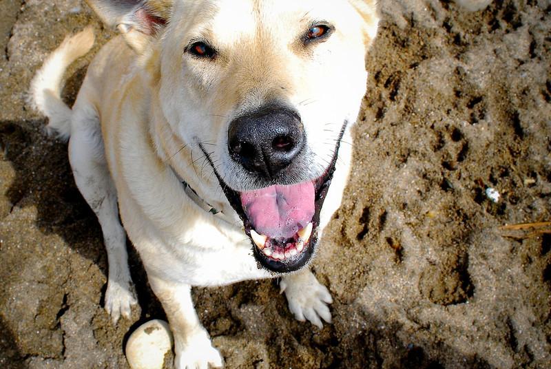 dogs_beach-069.jpg