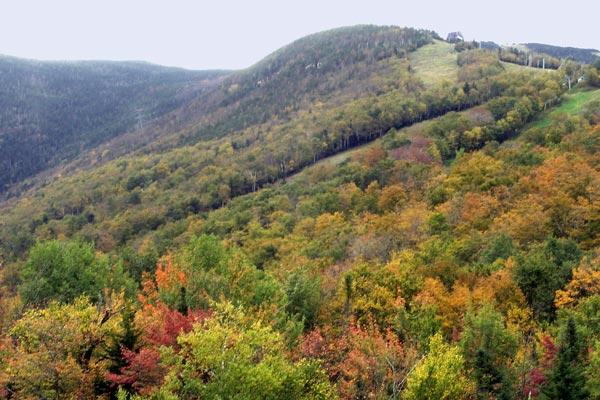 White Mountains 2007