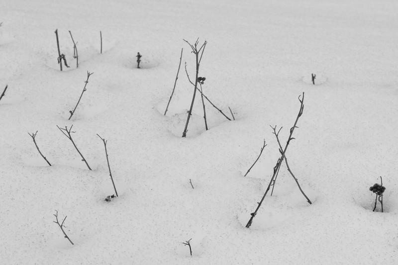 snow-sticks.jpg