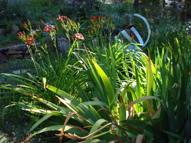 Front Garden with Day Lilies