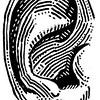 Misc +ear