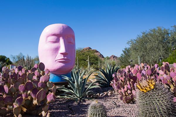 Desert Botanical Garden Phoenix 12/22/17