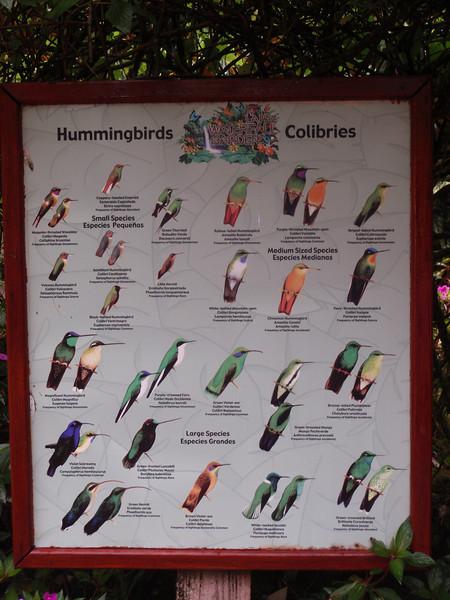 040_La Paz Waterfall Gardens. Hummingbirds.JPG