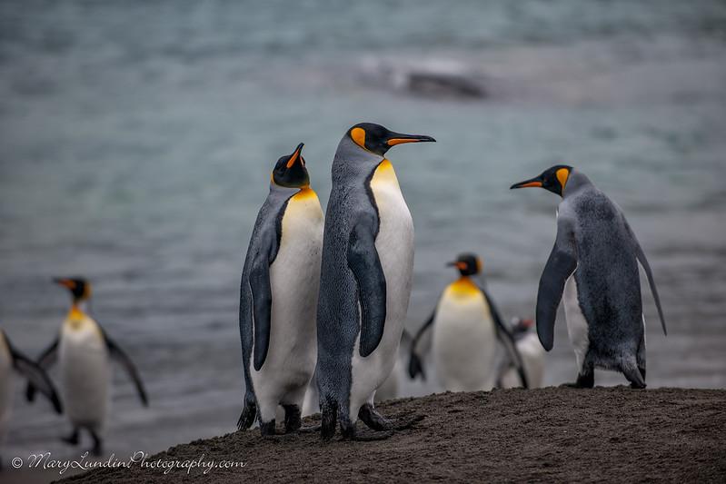 Antarctic-135
