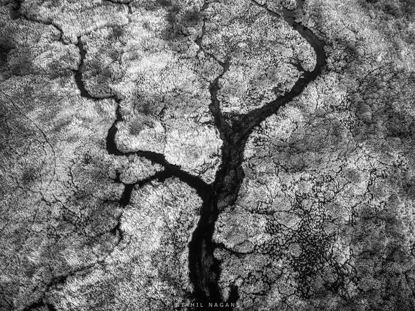 The Tree Spirit