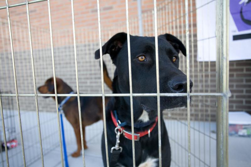 Petsmart_Puppies_RLoken_002_9009.jpg