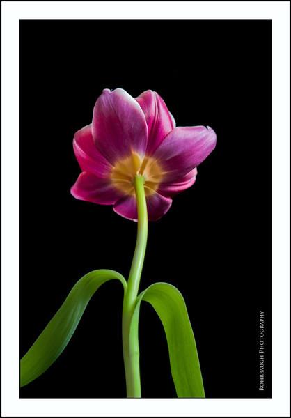 Rohrbaugh Photography Flowers 12.jpg