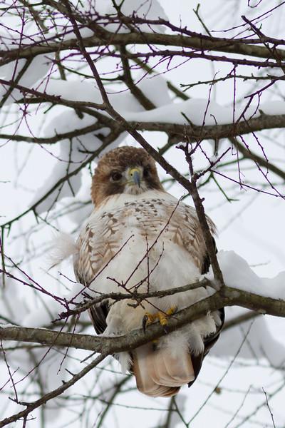 2016 01 Birds & Snow
