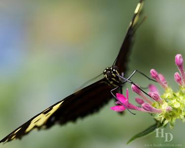 2010-01 Butterflies