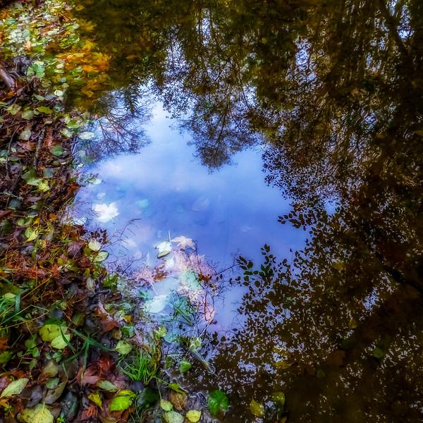 Fall reflections, Siebert Creek near Port Angeles, Washington