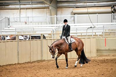 Novis Amature Hunter Under Saddle