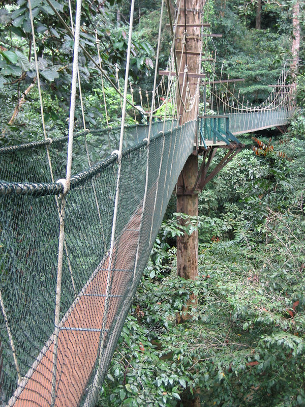 canopy walk at mulu national park