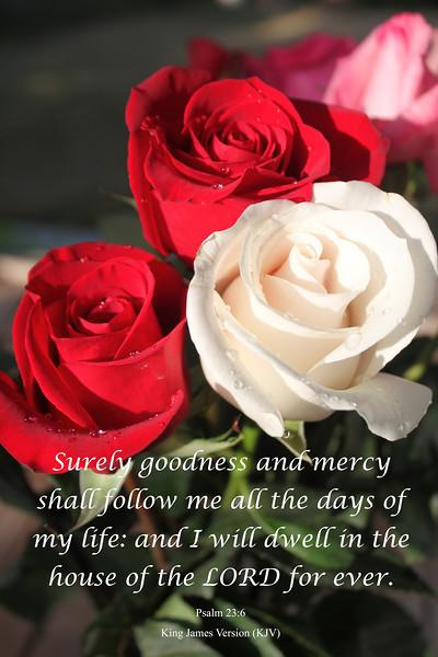 IMG_9446  Psalms 23-6.jpg