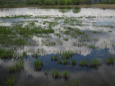 Nisqually Delta 2011