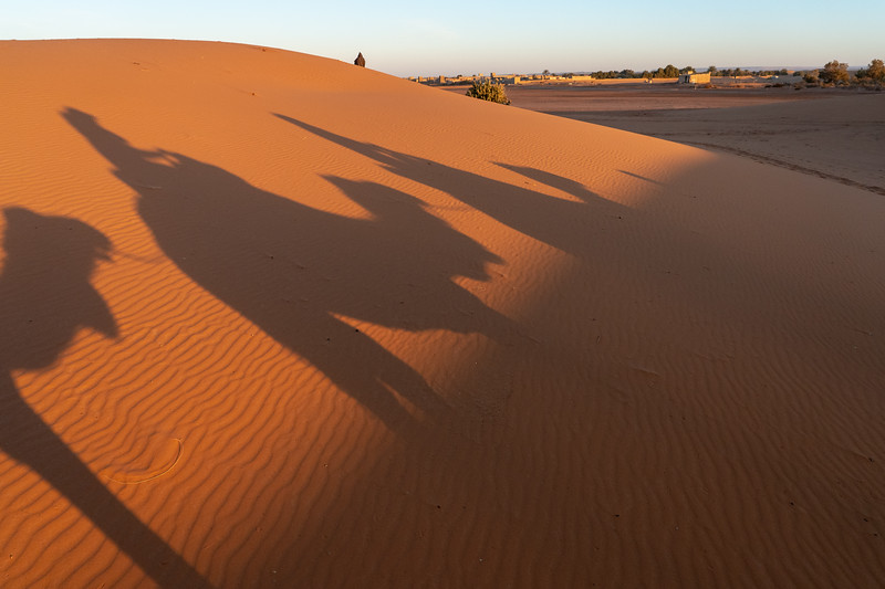 Camel shadows in the Sahara Desert