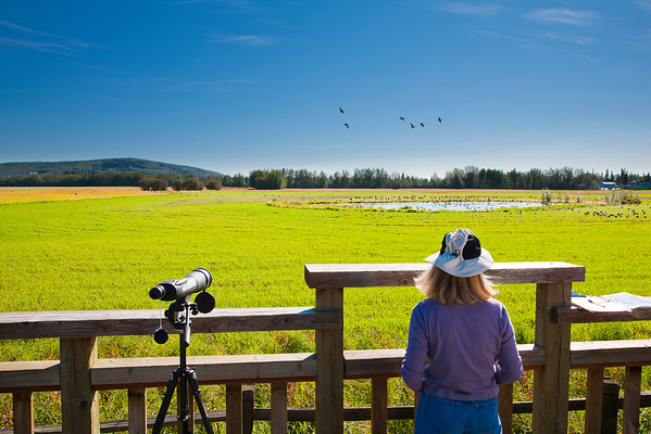 Wildlife Viewing & Birdwatching