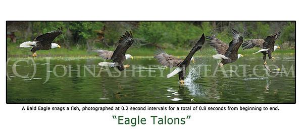 """Eagle Talons"" post card"