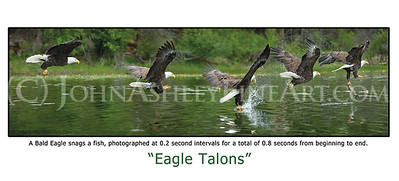 """Eagle Talons"" post card"