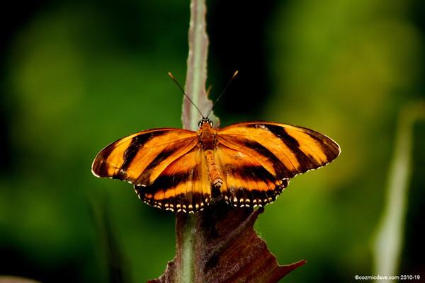 Butterflies & Moths. Set 6