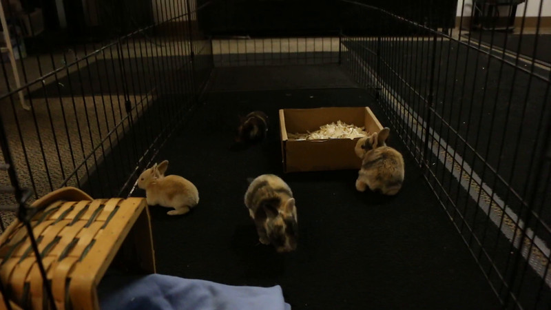 August 17, 2016 13 Day Old Bunnies.MOV
