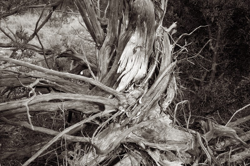 C Photo Lenswork 2006-11-25 Wood Study 2101.jpg