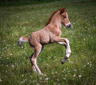 Current Young Horses