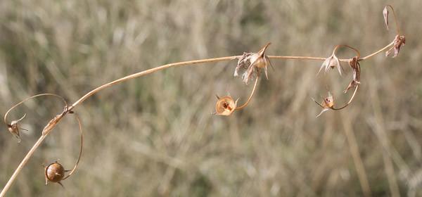 C1049 opp branching 5 sep forb