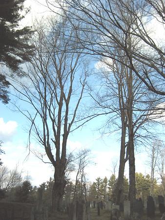 Old Burying Ground Trees 2006