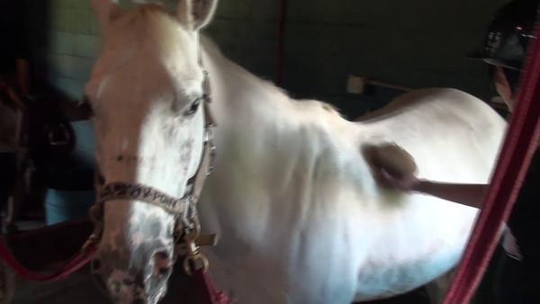 Equestrianism