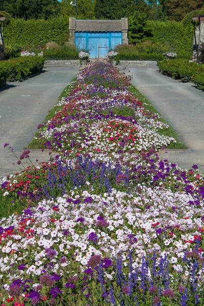 Perennials Garden