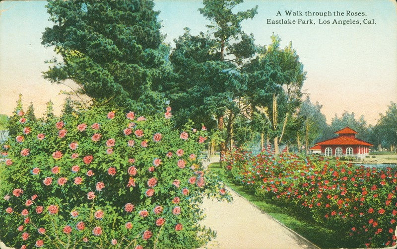 A Walk Through Roses