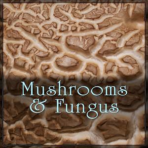 Mushrooms & Fungus