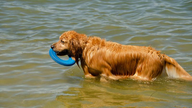 PuppyParty18-212.jpg