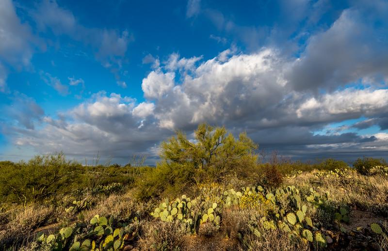 Big Sky and Paloverde #2