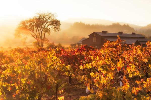 Vineyards - Fall