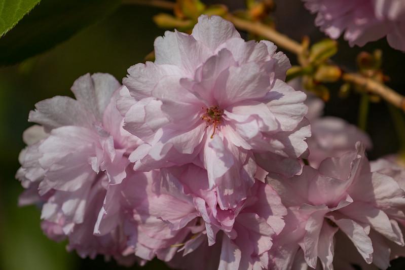 160417_6321 Flowers_47-1.jpg