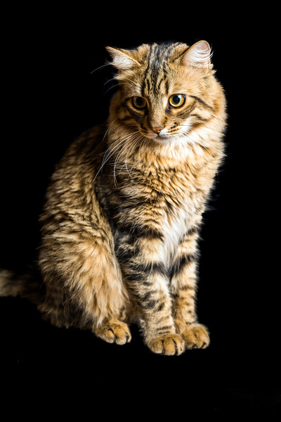 Portrait of a young cat on dark background