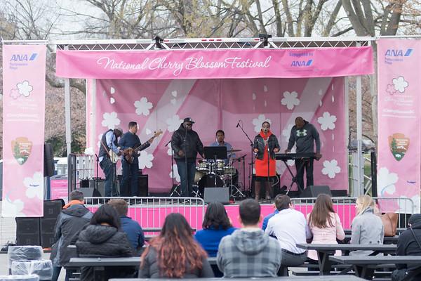 0320 Cherry Blossom Festival