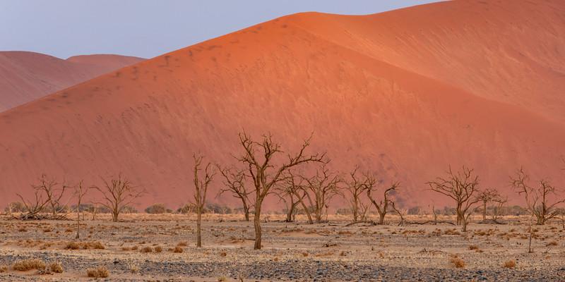 Namibia 69A4738.jpg