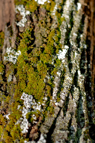Moss on the Tree 14
