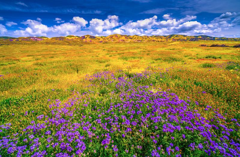 Carrizo Plain National Monument Wildflowers Superbloom Spring Symphony #6!  Elliot McGucken Fine Art Landscape Nature Photography Prints & Luxury Wall Art