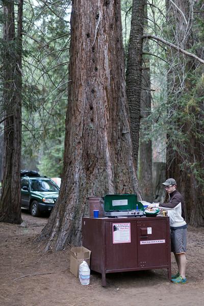 Sequoia_0758.jpg