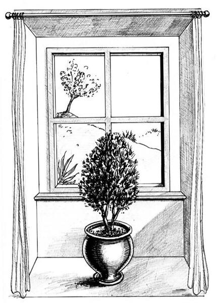 Window.gif.jpg