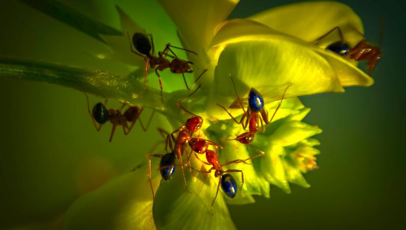 Bugs and Beetles - 148.jpg
