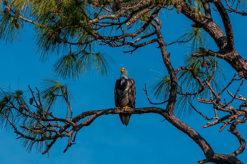 Eagles FL 2020-14.jpg