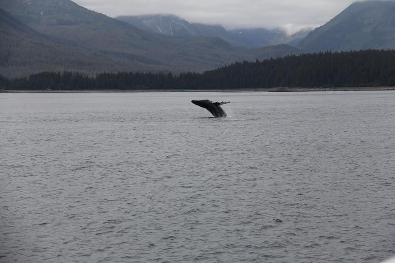 20160717-110 - WEX-Breaching Whale.JPG