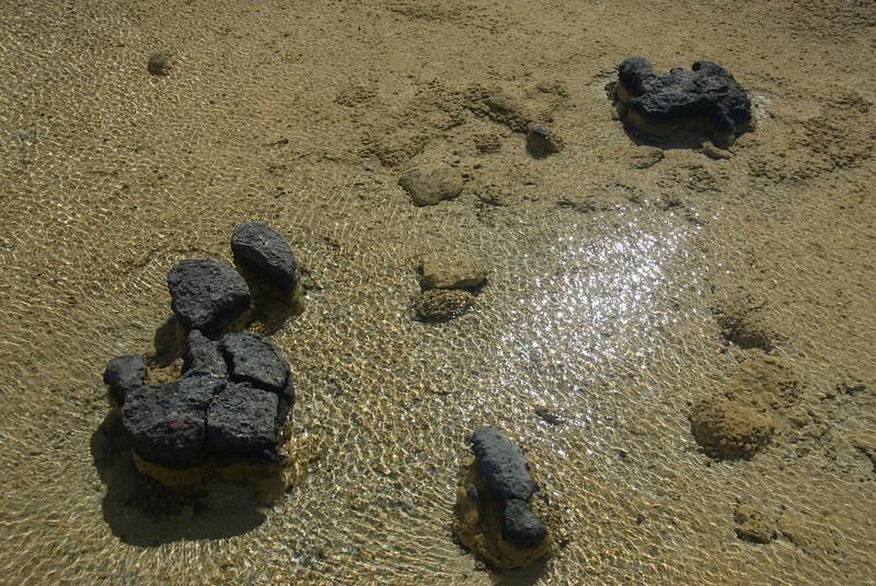 Stromatolite 12, Hamelin Pool - Shark Bay, Western Australia