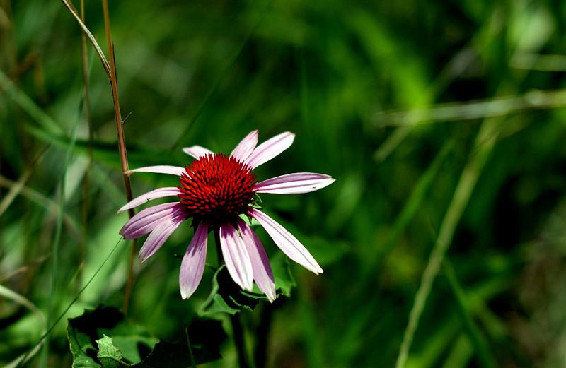 clip-015-flower-dallas_co-08jun06-2539.jpg