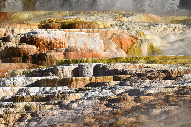 Terraces at Mammoth Hot Springs