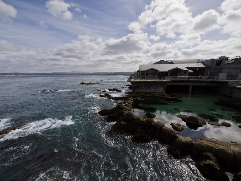 The aquarium at Monterey.
